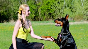 20 Tips for Your Dog Training