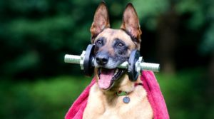 Healthy Habits & Exercises for Your Pets