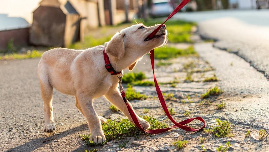 Individuālās apmācības suņiem