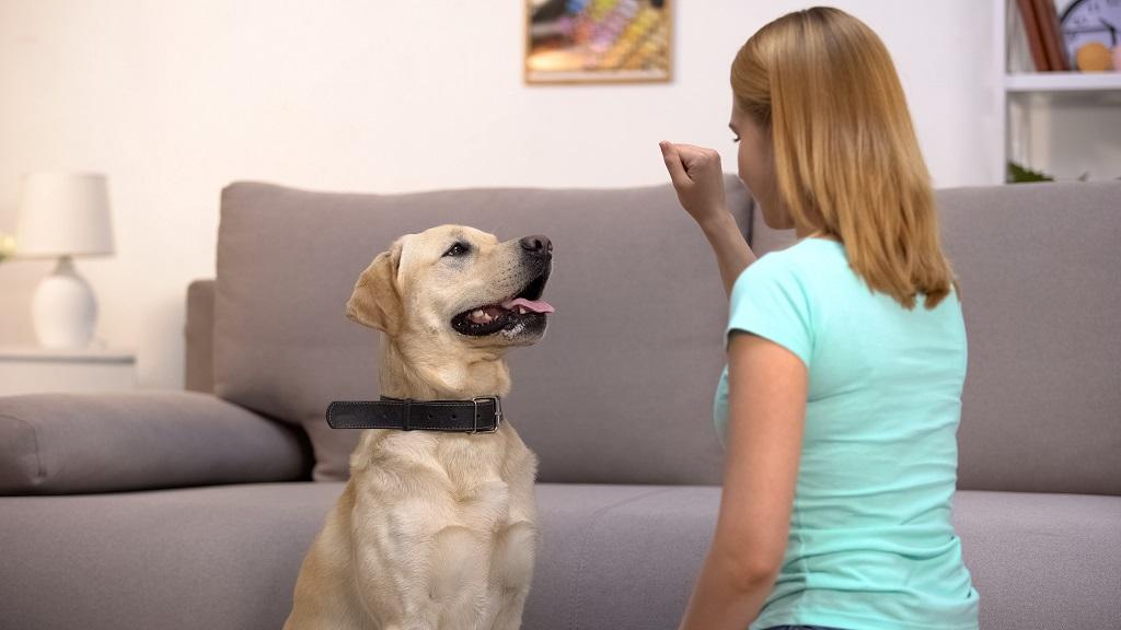suņa apmācība mājās